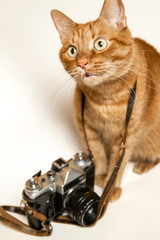 Red cat with a camera on a white background