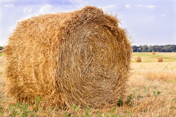 Dry hay stacks on countryside field during harvest time