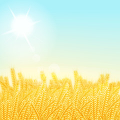 vector illustration. Wheat field on a Sunny morning. Background