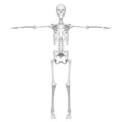 T字の形をした人体の骨の3Dレンダリング画像