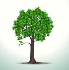Tree old with leave on white background,Vector Big tree drop shadow,Plant, nature and ecology