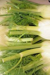 bulbs of fennel