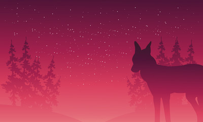 Silhouette of wolf and spruce