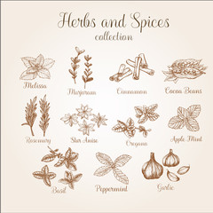 Hand drawn spices vintage set. It can be used for design packaging, menu etc.