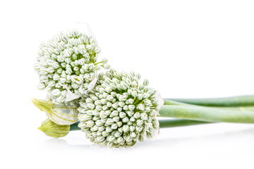 flowers onion isolated on white background