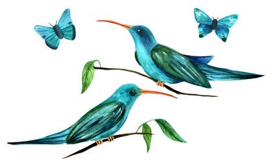 Teal blue watercolor colibri birds (hummingbirds) and butterflie