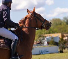 saut d'obstacles, chevaux de course
