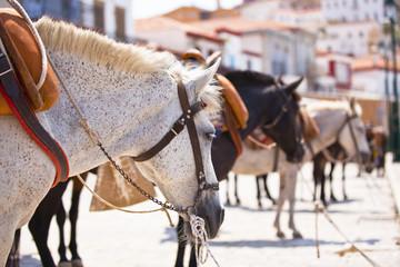 Horses at the island of Hydra