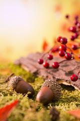 Autumn nature still life in bright light