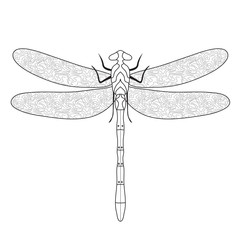 Dragonfly Doodle sketch coloring,dragonfly hand drawing. Vector illustration