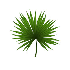 Palm leaf isolated on white background. Tropical illustration. Summer style. Nice element for your project.