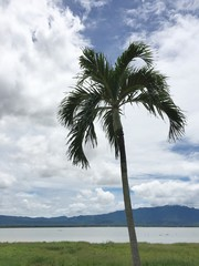 view landscape from sugar palm tree