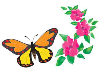 Бабочка и цветы на белом фоне