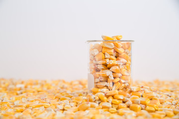 Beaker of corn kernels sitting in layer of corn