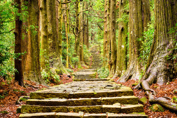 Foto op Canvas Weg in bos Sacred Trail in Japan