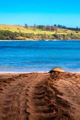 Sea turtle, Kauai Island, Hawaii, United States of America