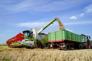 Fototapete - Getreideernte - Mähdrescher,  Abtransport des Getreides