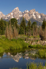 Smooth Water Beaver Dam Mountains Grand Teton National Park