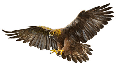 Golden eagle landing hand draw and paint vector illustration.