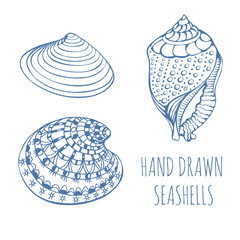 Seashells. Rapana. Black Sea Clam, holiday, marine life. Hand Drawn.