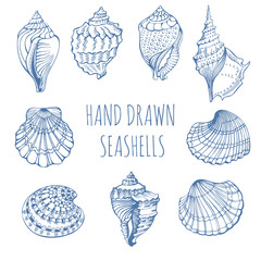 Seashells. Rapana. Black Sea Clam, holiday, marine life. Hand Drawn.