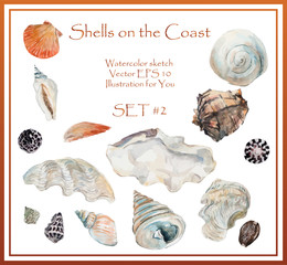 Seashell collection on sand background. Water color illustration. Vector Set