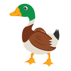 Cartoon Duck Vector Illustration
