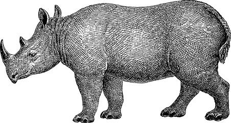 Vintage image rhino
