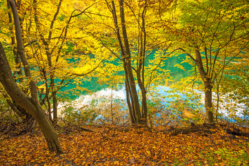 Nice autumnal scene with lake