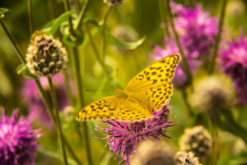 yellow butterfly sitting on pink flower