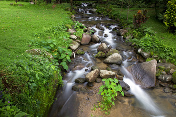 creek and rock with green grass and little flower