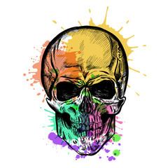 Skull Sketch With Watercolor Effect. Vector
