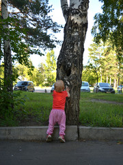 child looking into a hollow tree