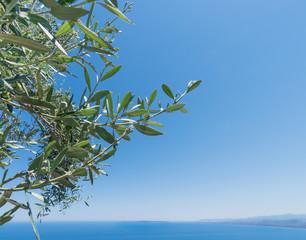 Olivenbaum mit Blauen Himmel