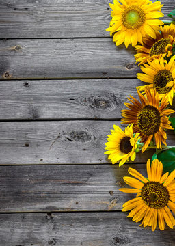 Old wooden background with sunflowers.