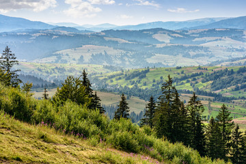 classic Carpathian mountain  landscape in summer