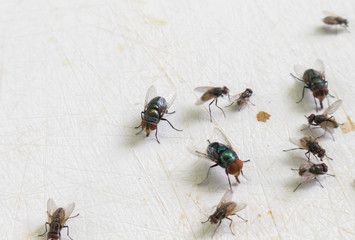 Houseflies perched on the dirty block, selective focus