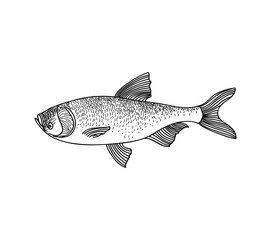 Fish. Hand drawn engraving seafood icon.