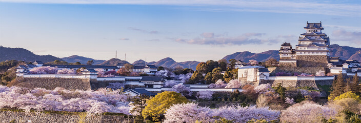 In de dag Kersenbloesem Japan Himeji castle with light up in sakura cherry blossom season