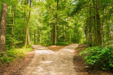 Garden Poster Road in forest Wald Weg Richtung Entscheiden