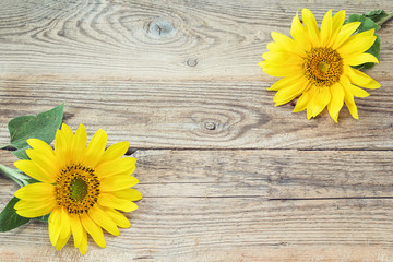 Background with  sunflowers on old wooden boards. Space for text