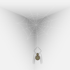 Spider on a web in the corner of the room