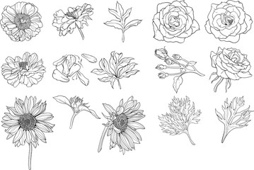 Set of various isolated flower.