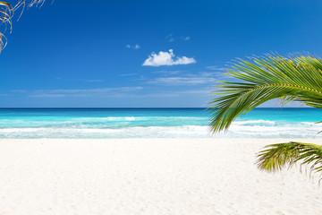 Perfect caribbean beach