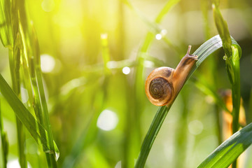 Little snail on green grass