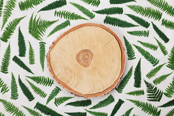 Fern leaves and cross section of birch trunk on gray background top view. Flat lay styling.