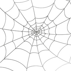 Vector Illustration of a Spiderweb on a White Background