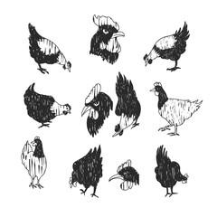 chicken doodle black