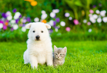 White Swiss Shepherd`s puppy and kitten sitting together on green grass