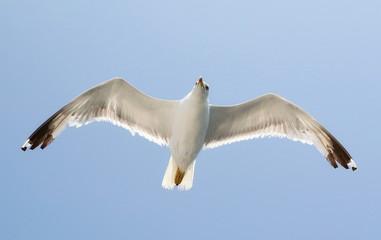 white seagull in blue sky